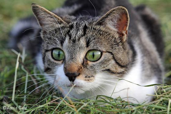 Katzen Fangen Mause Artgerecht Tier