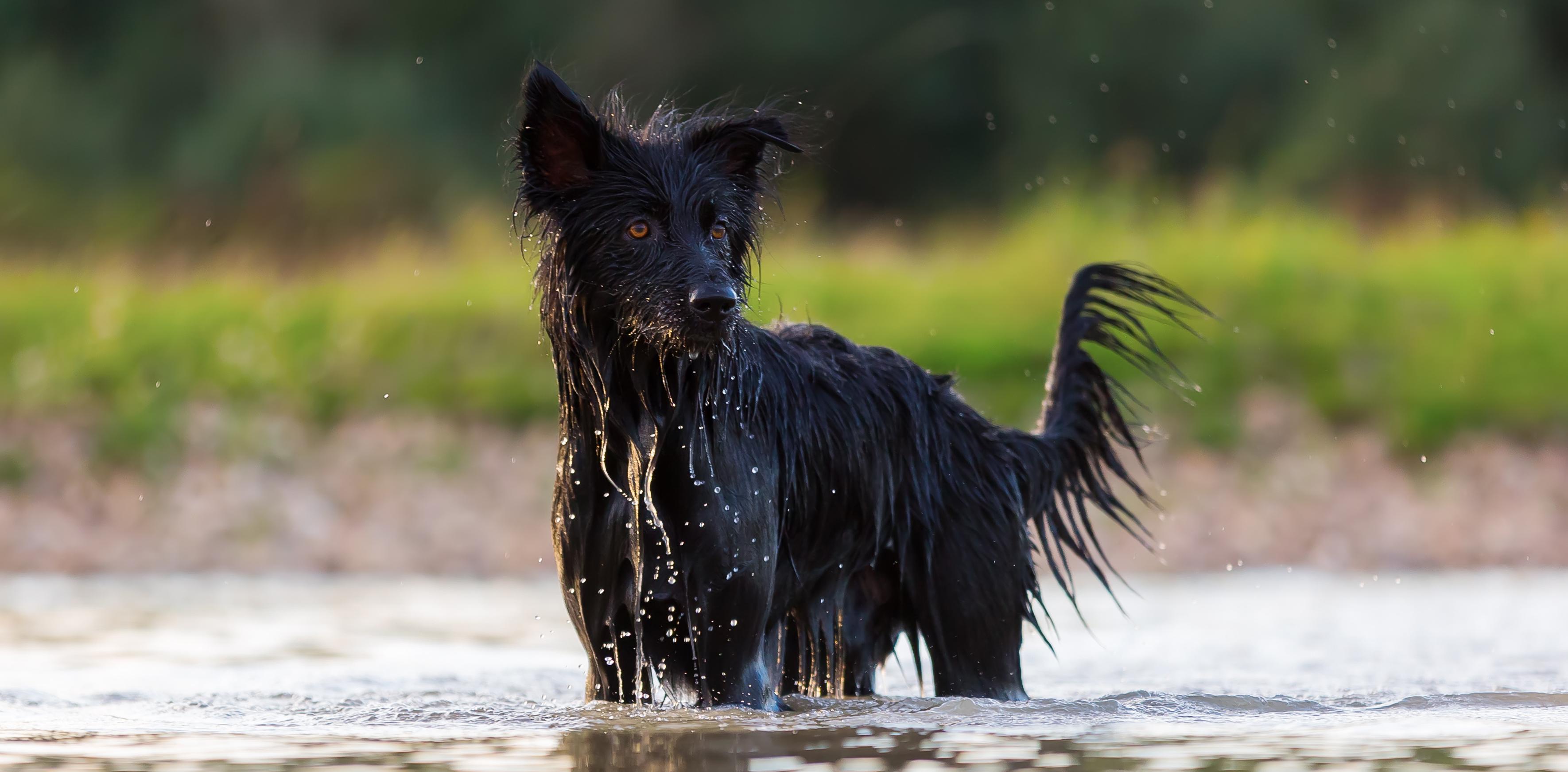 partnersuche partnersuche pferd mit und vergleich hund seiten  Leishmaniose Wikipedia. Leishmaniose Wikipedia.