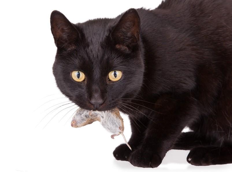 Die Katze als Beutetierfänger - Teil 1 — artgerecht Tier